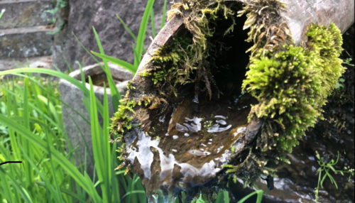 竹筒の水滴