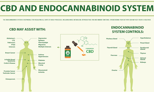 CBD-Endo-Cannabinoid-System