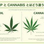 HEMP と CANNABISの違いは?