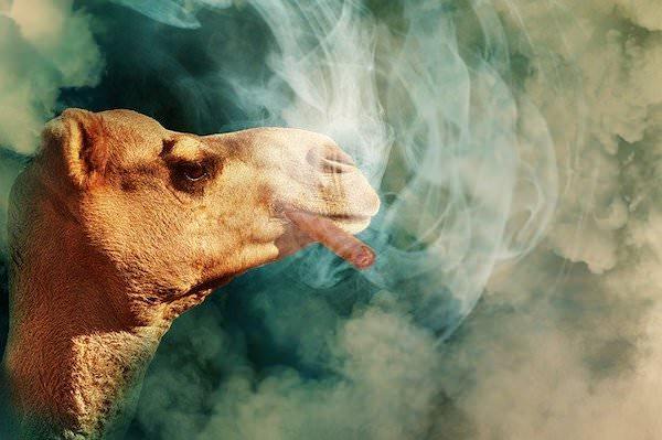 Camelタバコ吸う