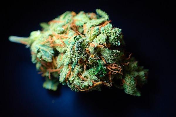医療大麻バッズ