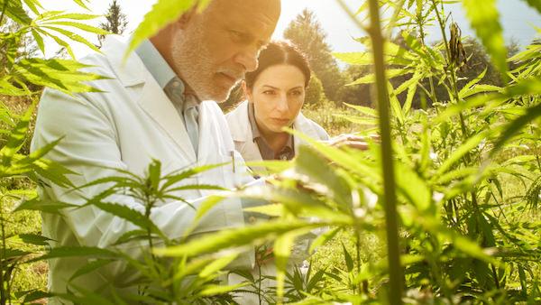 大麻と医者