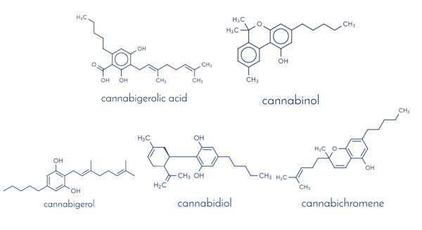 使われたカンナビノイド一覧