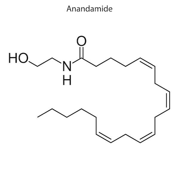 アナンダミド