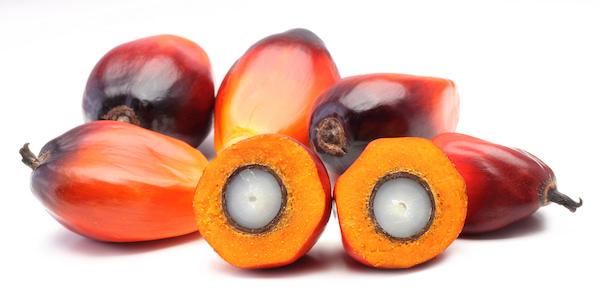 パームの果房と核