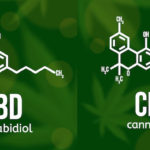 CBNとCBDの違いは?